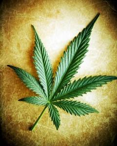 Hay-23-millones-consumidores-cannabis-Union-Europea