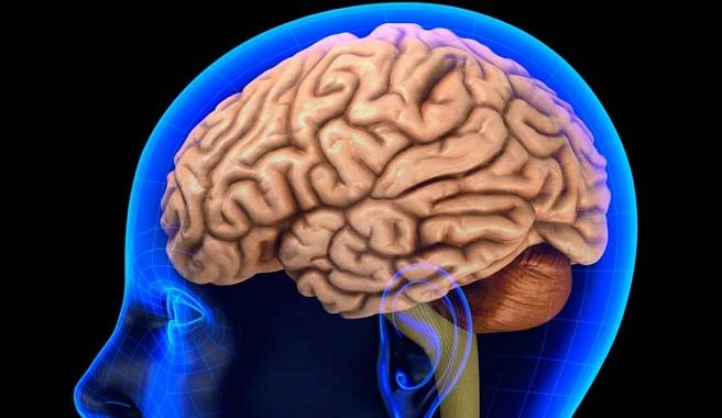 Conexiones cerebrales